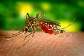 A Zika vírus Guillain-Barré szindrómát is okozhat?