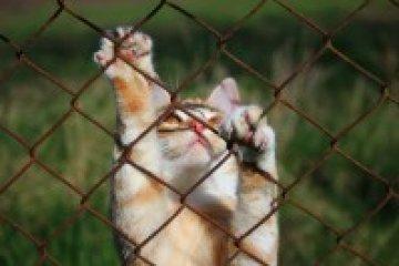 Megbetegíthet a macskakarmolás